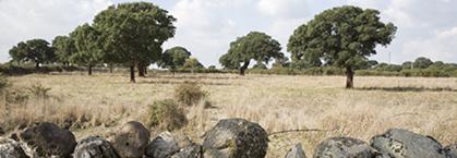 Immagine rappresentativa del territorio